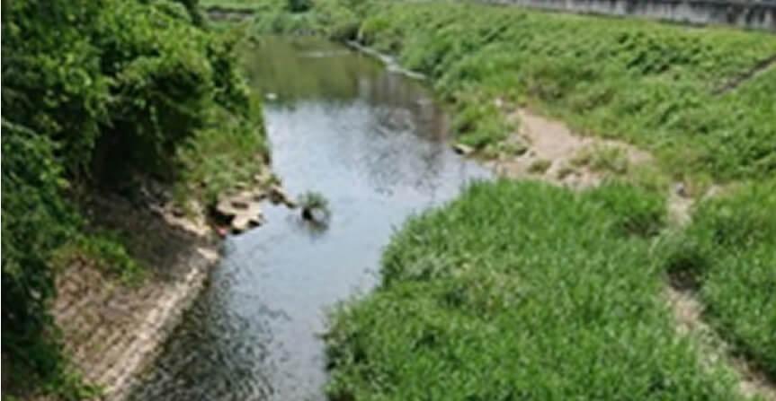 平井川の生き物調査