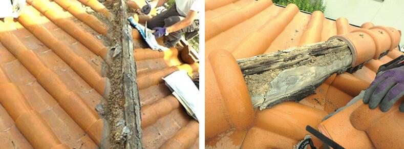 腐食した瓦下地木材