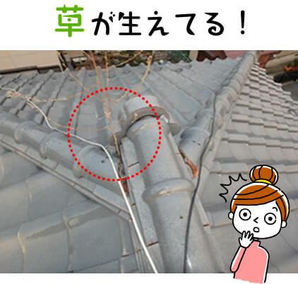 屋根に草が生えてる!