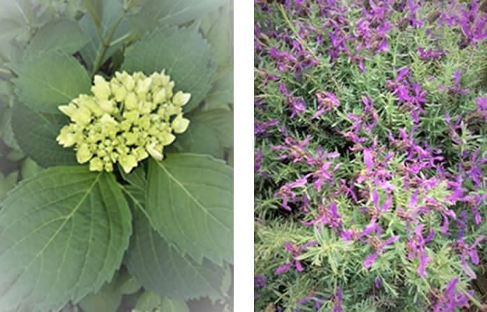 花で感じる季節の移り変わり
