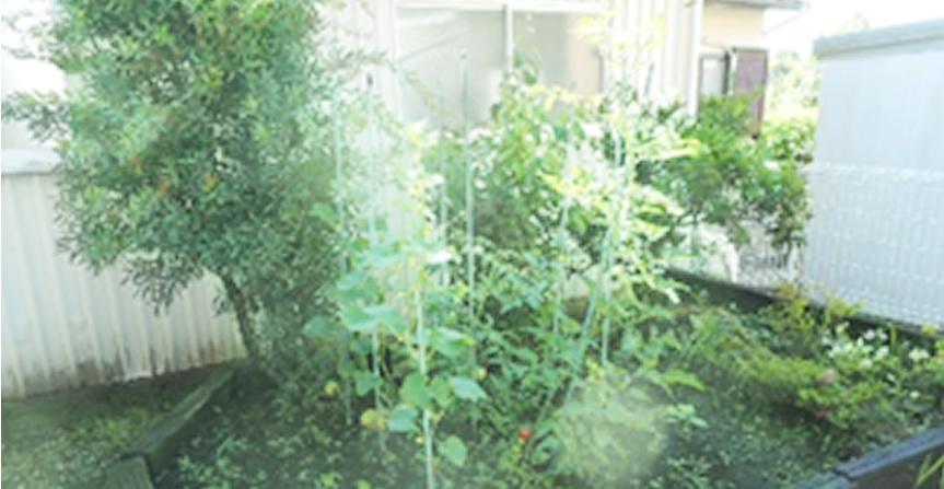 野菜の苗を買いました