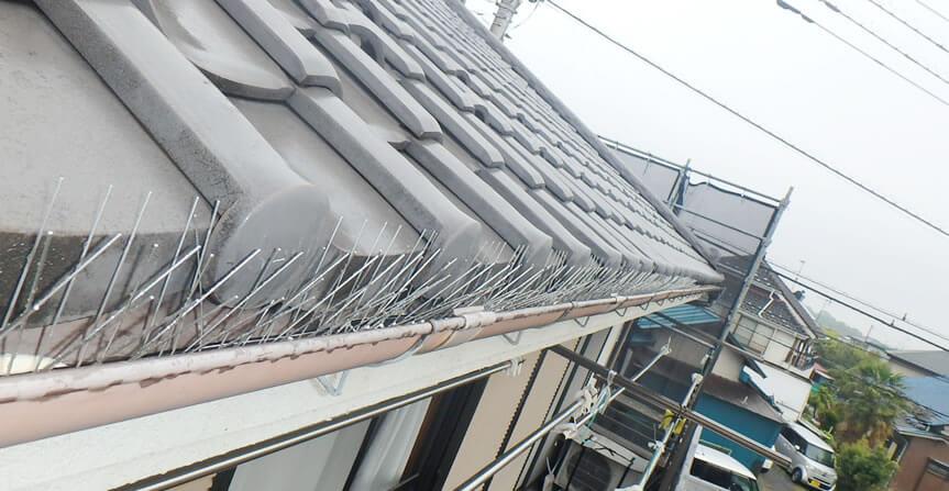 屋根の鳥よけ工事